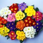 un fiore per la vita CAV